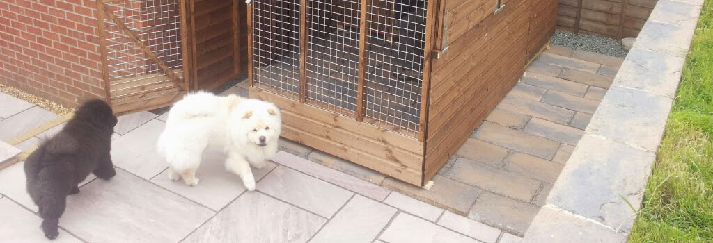 dog kennels and animal shelters